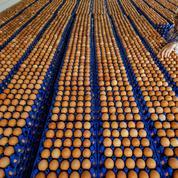 Fipronil dans les œufs: des risques limités pour la santé