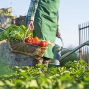 Salade, épinard, navet...: les plantations, c'est à la fin de l'été!