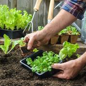 Salade, épinard, navet...: les plantations, c'est maintenant!