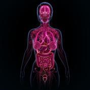 «Les perturbateurs endocriniens ciblent notre système hormonal»