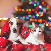 Chiens et chats domestiques, victimes collatérales des fêtes de fin d'année