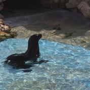 Une saison au zoo :l'otarie Tanguy, la nouvelle star du Zoo de La Flèche à découvrir sur France 4