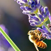 Des fleurs pour les abeilles, saison 3