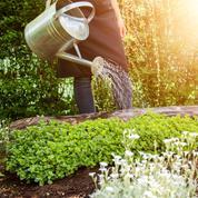 Du bon usage de l'arrosage au jardin et sur son balcon