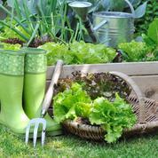 Jardin: par ici la bonne salade!