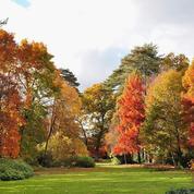 À la découverte des plus beaux arboretums de France