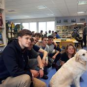 Ce lycée a embauché un chien «médiateur» pour éviter les conflits entre élèves