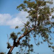 En changeant de fournisseur d'énergie, on peut planter des arbres
