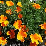 Maladies, ravageurs: ces fleurs qui résistent à tout