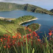 Les Açores dévoilent leurs secrets botaniques