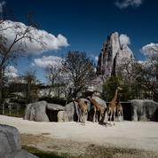 200 millions d'euros, la facture est lourde pour le Parc zoologique de Paris