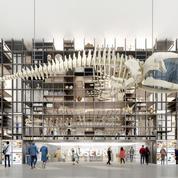 Le Muséum mise sur la Ménagerie et la paléontologie