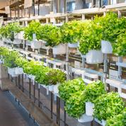 Modulo, un potager d'intérieur pour faire pousser ses salades