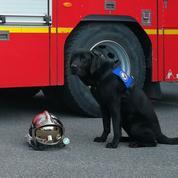Retour sur la mission de Lol à Cahors, le premier chien d'assistance judiciaire