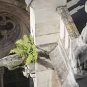 Notre-Dame de Paris en 12 citations
