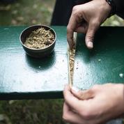 Près d'un Français sur deux est favorable à la légalisation du cannabis