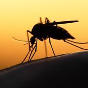 Journée mondiale de lutte contre le paludisme: 5 choses essentielles à savoir sur cette maladie