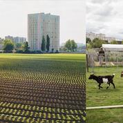 La renaissance de la dernière ferme maraîchère de Saint-Denis