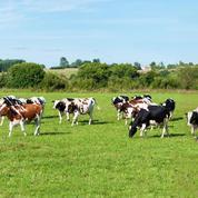 La mort mystérieuse de bovins en Bretagne inquiète des éleveurs
