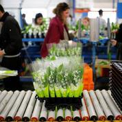 Savez-vous où est cultivé le muguet vendu le 1er Mai?