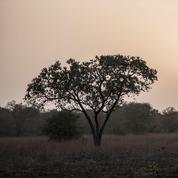 Bénin: le guide des Français disparus retrouvé mort