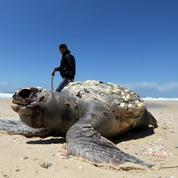 La Terre a déjà connu cinq «extinctions de masse»