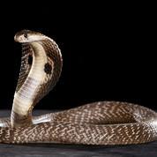 Pourquoi les serpents n'ont-ils pas de pattes?