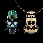 Les coléoptères s'exposent pour ne pas disparaître