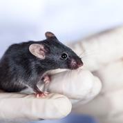 Une thérapie génique redonne la vue à des souris aveugles