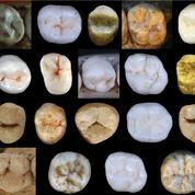 A la recherche de cet ancêtre inconnu que nous partageons avec Néandertal