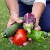 Aubergine, courgette, poivron: plantez les «légumes fruits» de l'été