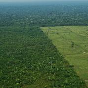 Biodiversité: rien ne remplace la forêt primaire