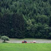 La forêt sauvage gagne du terrain en France