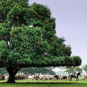 Safari en Colombie dans l'écorégion des Llanos