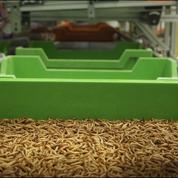 Ynsect fourmille d'ambitions avec sa ferme de scarabées