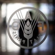 Les étranges pratiques de la Chine pour conquérir la FAO