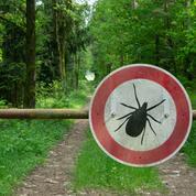 Maladie de Lyme: hausse «significative» des cas diagnostiqués en un an