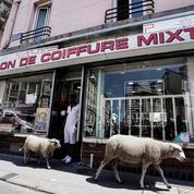 Un troupeau de moutons en transhumance dans le Grand Paris