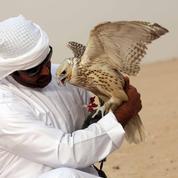 Au Koweït, le trafic de faucons a encore pignon sur rue