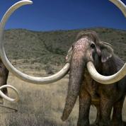La terre des géants :France 4 zoome sur ces animaux menacés