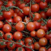 Les serres chauffées autorisées dans l'agriculture bio