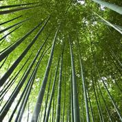 La Bambouseraie d'Anduze, un petit trésor dans les Cévennes