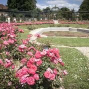 La Roseraie de L'Haÿ-les-Roses, premier jardin de la reine des fleurs
