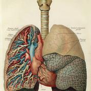 Les poumons, une pompe autonome sous contrôle