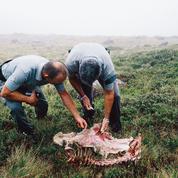 Les éleveurs de brebis excédés par les attaques d'ours et de loups