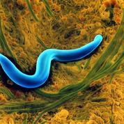 Les nématodes représentent 80% de tous les animaux vivant sur Terre