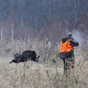Franc succès pour le permis national de chasse à moitié prix