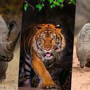 Le monde au chevet des espèces menacées