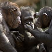 Les enseignements des animaux sur le langage