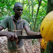 Bras de fer sur les prix du cacao